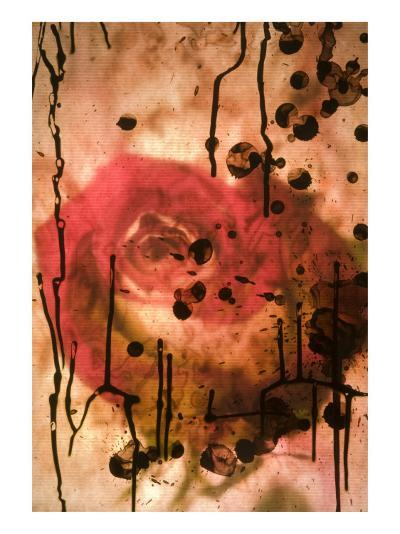 Red Rose Through Paper with Ink Drawing-Daniel Root-Giclee Print