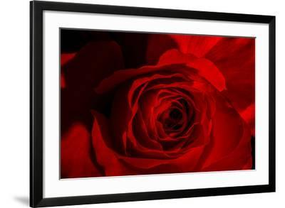 Red Rose-Marco Carmassi-Framed Photographic Print