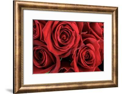 Red Roses III-William Neill-Framed Giclee Print