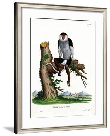 Red-Shanked Douc Langur--Framed Giclee Print