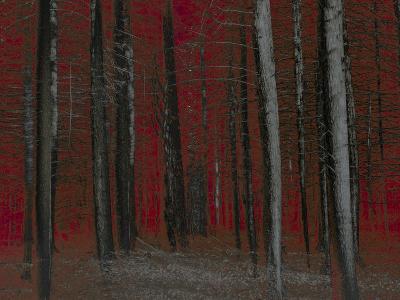 Red Sky at Night-Valda Bailey-Photographic Print