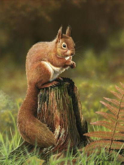 Red Squirrel 5753-Nigel Artingstall-Giclee Print