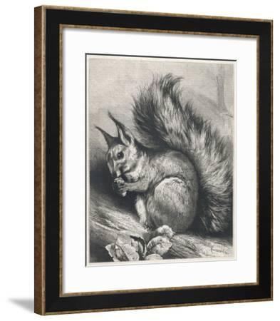 Red Squirrel Eating a Nut-Harrison Weir-Framed Giclee Print