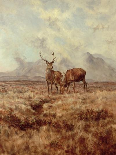 Red Stags, Ben Buie, 1982-Tim Scott Bolton-Giclee Print