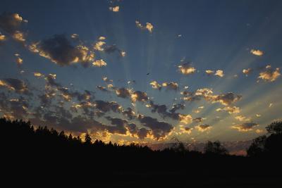 Red-Tail Hawk Sunset-Ken Archer-Photographic Print