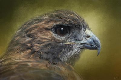 Red Tailed Hawk at Reelfoot-Jai Johnson-Giclee Print