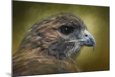 Red Tailed Hawk at Reelfoot-Jai Johnson-Mounted Giclee Print