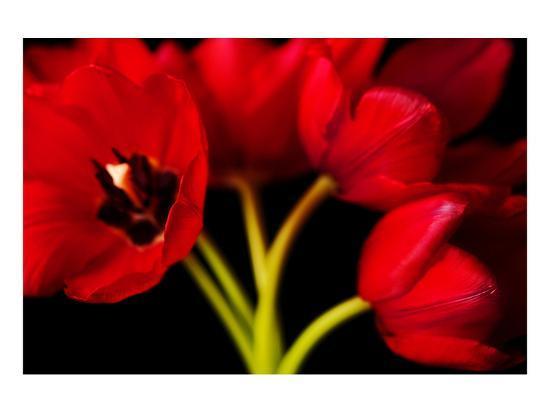 Red Tulips II-Christine Zalewski-Art Print