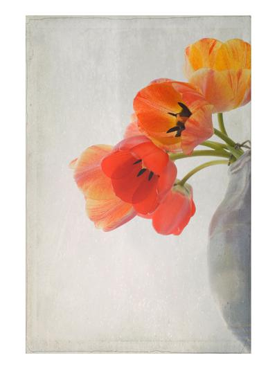 Red Tulips II-Judy Stalus-Art Print