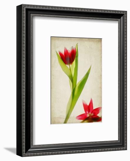 Red Tulips IV-Judy Stalus-Framed Art Print