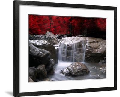 Red Vision-Philippe Sainte-Laudy-Framed Photographic Print