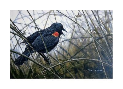 Red Winged Black Bird-Don Li-Leger-Art Print