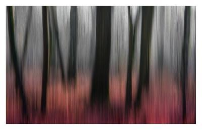 Red Wood-Gilbert Claes-Giclee Print