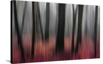 Red Wood-Gilbert Claes-Stretched Canvas Print