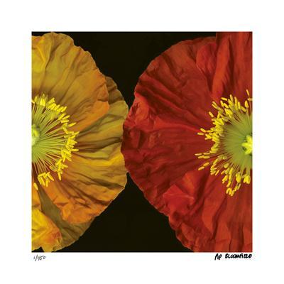 https://imgc.artprintimages.com/img/print/red-yellow-poppy-ii_u-l-f2kkvl0.jpg?p=0