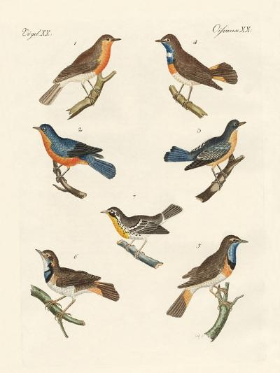 Redbreasts, Bluethroats and Yellowthroats--Giclee Print