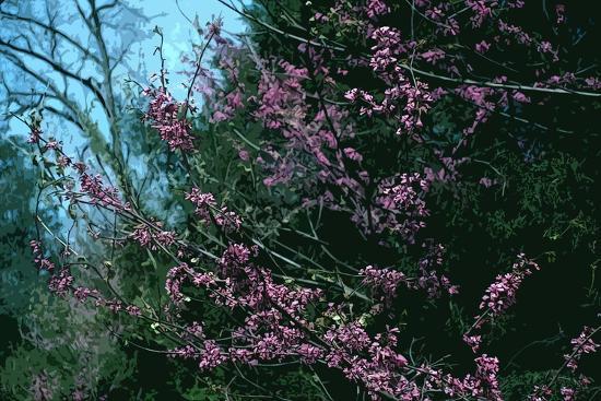 Redbud Tree in Bloom-Gregg Vicik-Giclee Print