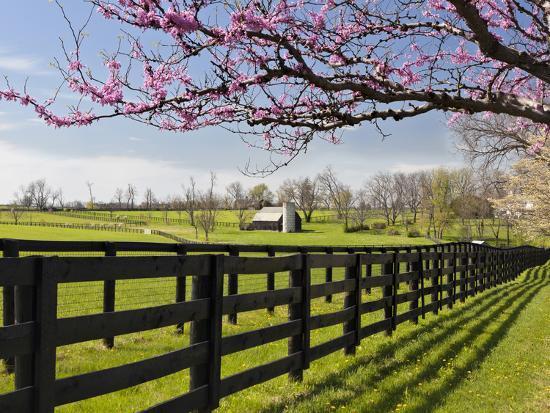 Redbud Trees in Full Bloom, Lexington, Kentucky, Usa-Adam Jones-Photographic Print