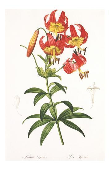 Redoute Lilium Superbum-Pierre-Joseph Redout?-Art Print