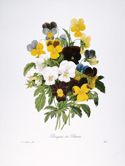 Redoute: Pansy, 1833-Pierre-Joseph Redout?-Giclee Print