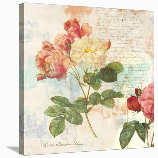 Redoute's Roses 2.0 I-Eric Chestier-Stretched Canvas Print