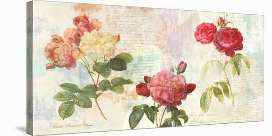 Redoute's Roses 2.0-Eric Chestier-Stretched Canvas Print