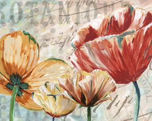 Poppy Layers II by Redstreake