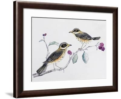Redwing Pair (Turdus Iliacus), Turdidae--Framed Giclee Print
