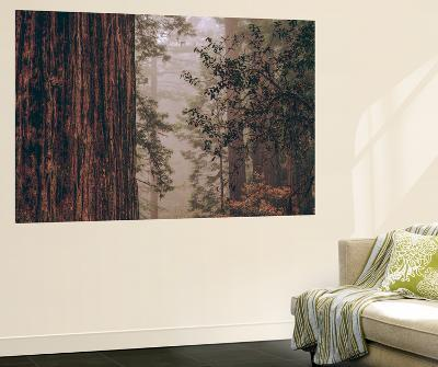 Redwood Forest Detail, California Coast-Vincent James-Wall Mural