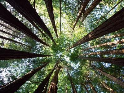 https://imgc.artprintimages.com/img/print/redwood-grove_u-l-pxtlma0.jpg?p=0