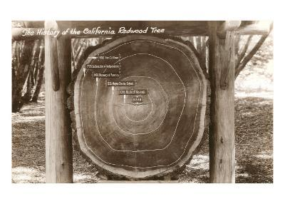 Redwood Section with Dates--Art Print