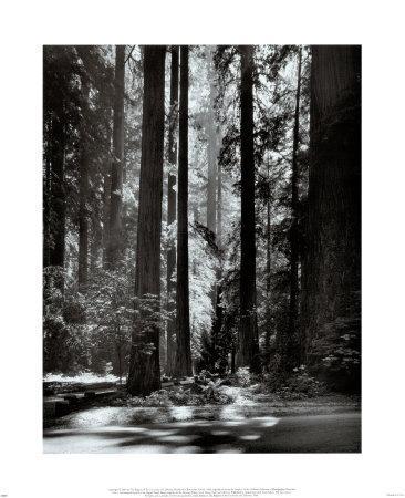 https://imgc.artprintimages.com/img/print/redwoods-founders-grove_u-l-e6xm60.jpg?artPerspective=n