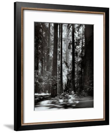 Redwoods, Founders Grove-Ansel Adams-Framed Art Print