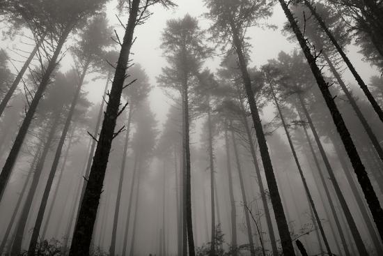 Redwoods II-Brian Moore-Photographic Print