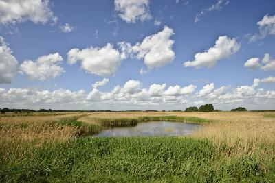 Reed Beds at Joist Fen, Lakenheath Fen Rspb Reserve, Suffolk, UK, May 2011-Terry Whittaker-Photographic Print