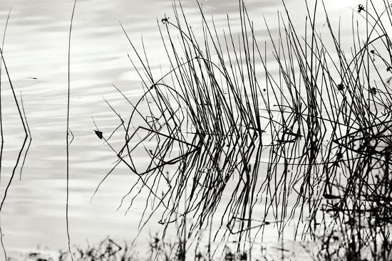 Reeds 2-Lee Peterson-Photographic Print