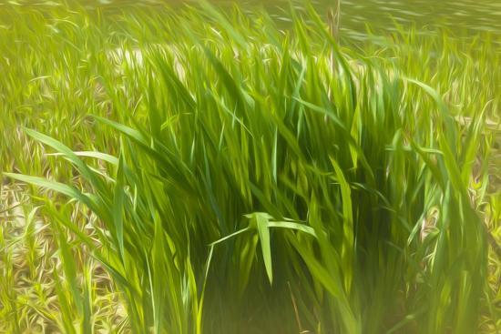 Reeds Along Seacoast-Anthony Paladino-Giclee Print