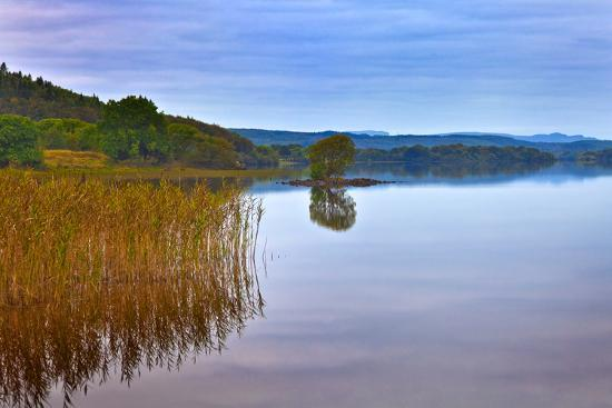 Reeds and an Islet in Lough Macnean, County Fermanagh, Northern Ireland--Photographic Print
