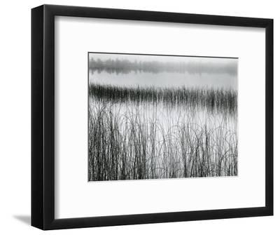 Reeds and Fog, Michigan, 1957-Brett Weston-Framed Photographic Print