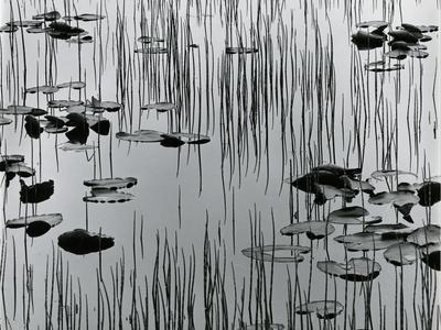 https://imgc.artprintimages.com/img/print/reeds-and-lily-pads-alaska-1977_u-l-q1g6r190.jpg?p=0