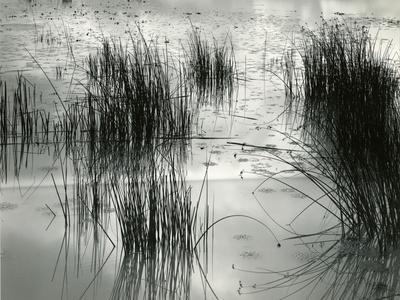 https://imgc.artprintimages.com/img/print/reeds-france-1960_u-l-q1g6w9e0.jpg?p=0