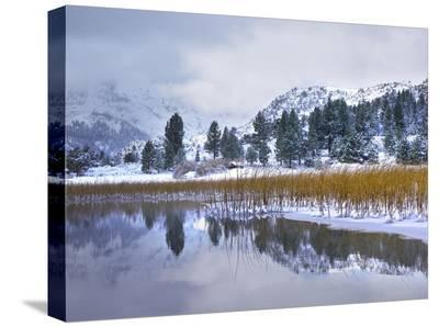 Reeds growing through frozen surface of June Lake, eastern Sierra Nevada, California-Tim Fitzharris-Stretched Canvas Print