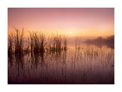 Reeds reflected in Sweet Bay Pond at sunrise, Everglades National Park, Florida-Tim Fitzharris-Art Print