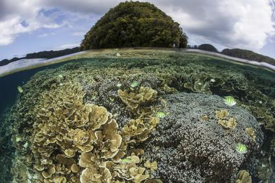 Reef-Building Corals Grow Inside Palau's Lagoon-Stocktrek Images-Photographic Print