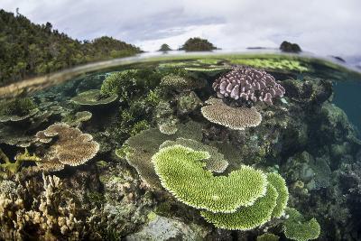Reef-Building Corals in Raja Ampat, Indonesia-Stocktrek Images-Photographic Print