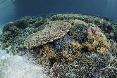 Reef-Building Corals Near Alor, Indonesia-Stocktrek Images-Photographic Print