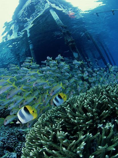 Reef Panorama Under Pier, French Polynesia-Tobias Bernhard-Photographic Print