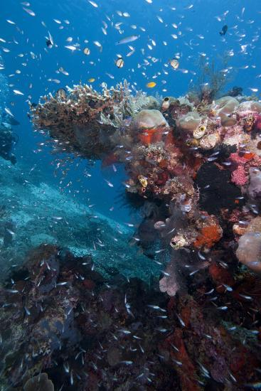 Reef Scene, Komodo, Indonesia, Southeast Asia, Asia-Lisa Collins-Photographic Print