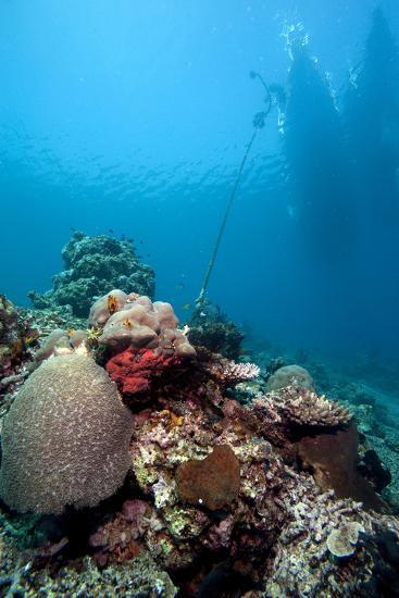 Reef Scene, Komodo, Indonesia, Southeast Asia, Asia-Lisa Collins-Photographic Print