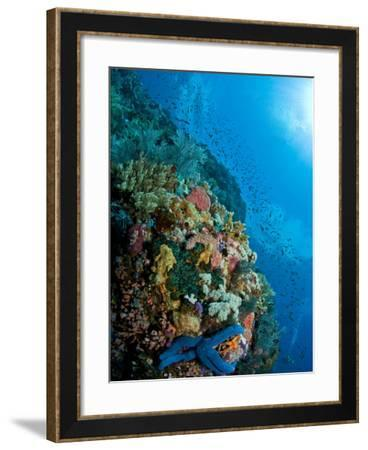 Reef Scene with Corals And Fish, Komodo, Indonesia-Stocktrek Images-Framed Photographic Print